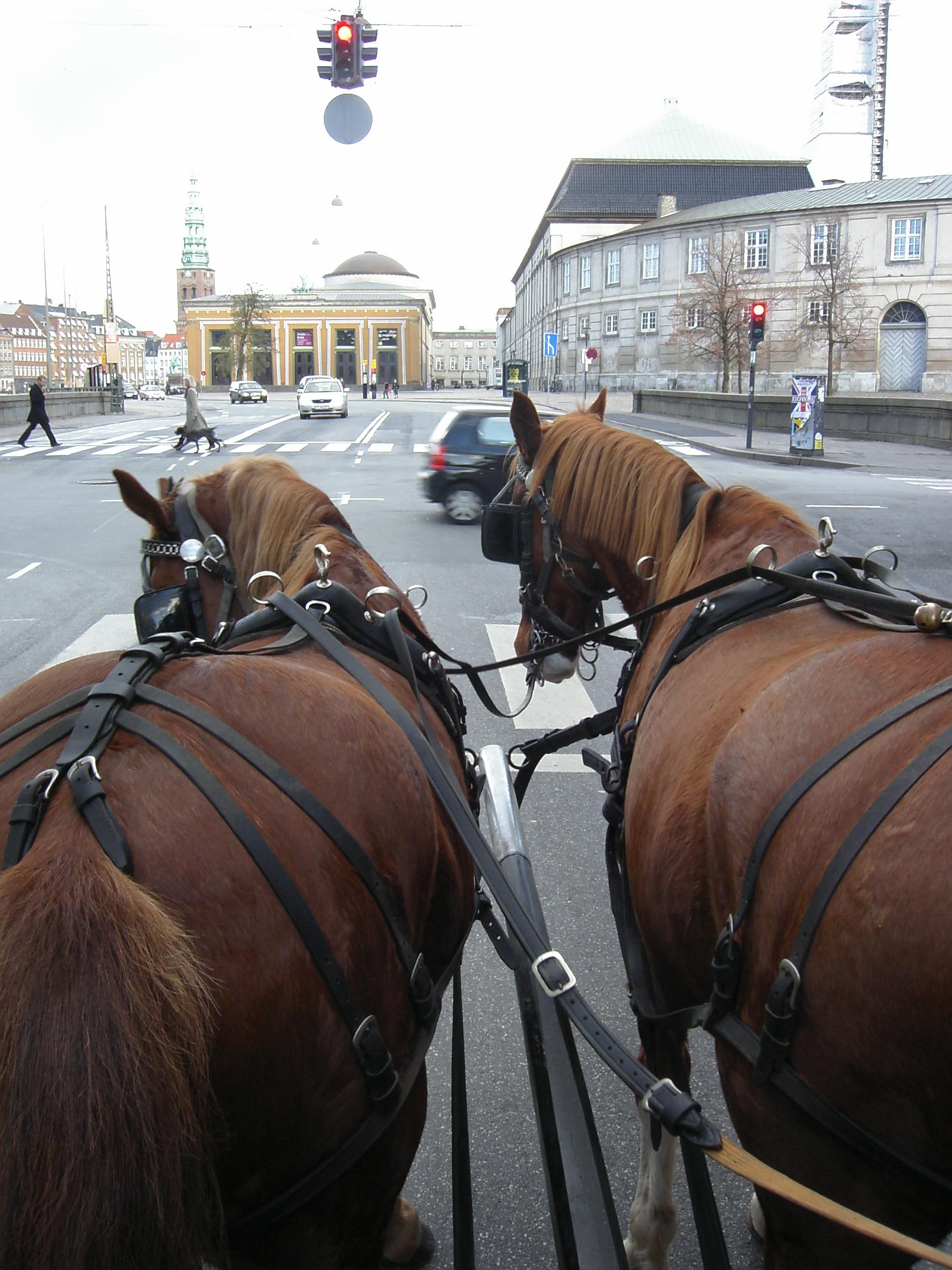 Hestekørsel